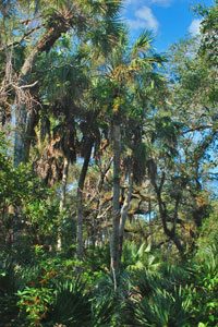 South Vero Conservation Land